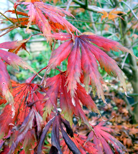 red_leaves_blog1.jpg