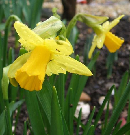 more springing